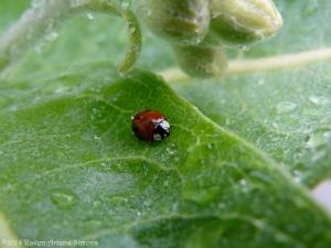 5:24:14 ladybug sig