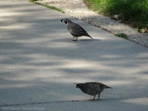 5:25:14 dubious quail sig