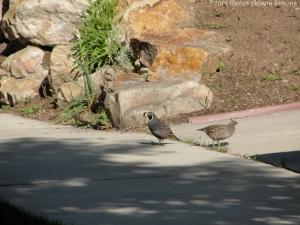 5:25:14 quail sig