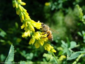 5:27:14 honeybee 1 sig