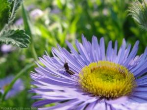 5:27:14 tiny grasshopper 1 sig