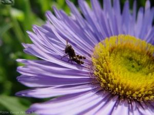 5:27:14 tiny grasshopper closer sig