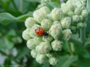 5:29:14 ladybug sig