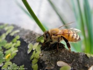 5:31:14 drinking bee 1 sig