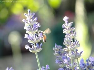 6:11:14 bright bee sig