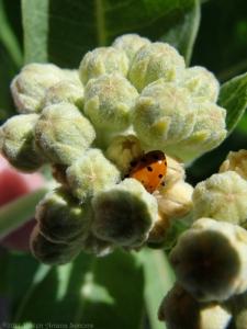 6:1:14 ladybug sig