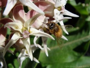 6:1:14 pollen head sig