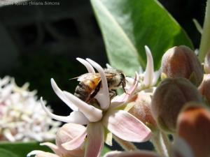 6:1:14 side honeybee sig