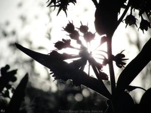 6:14:14 leaves sig