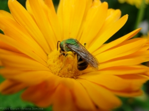 6:16:14 sweat bee bum sig