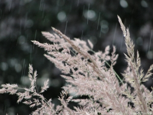 6:17:14 grasses 1 sig