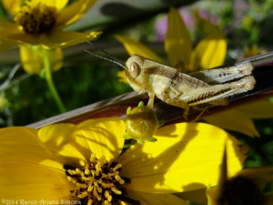 6:19:14 grasshopper best sig
