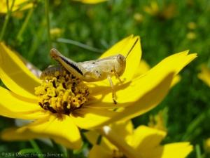 6:19:14 grasshopper sig