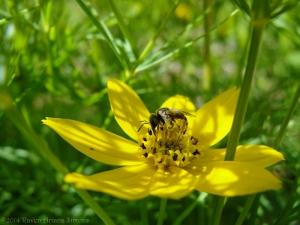 6:19:14 pollen bearer sig