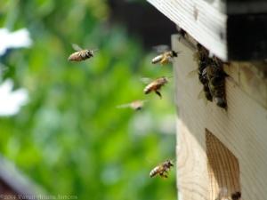 6:23:14 bees 2 sig