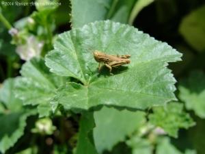 6:23:14 grasshopper sig