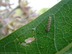 6:25:14 caterpillar 2 sig