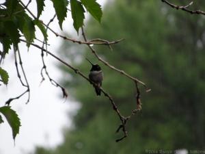 6:26:14 wet bird 1 sig