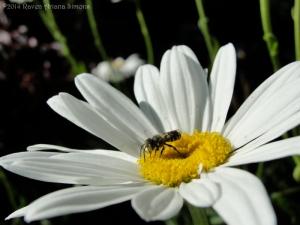 6:29:14 bee small 1 sig