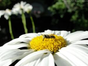 6:29:14 bee small sig