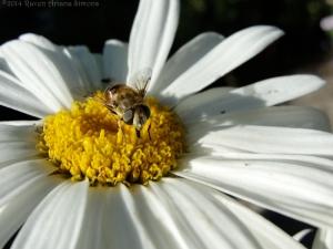 6:29:14 flower fly sig