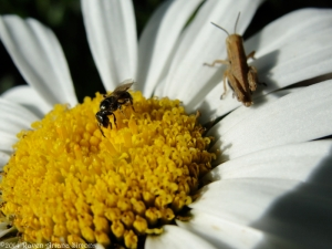 6:29:14 grasshopper bee 1 sig