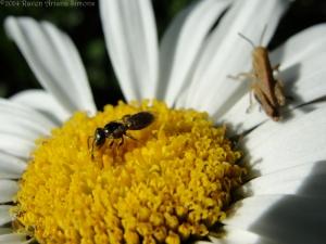 6:29:14 grasshopper bee sig