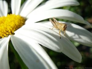 6:29:14 grasshopper sig