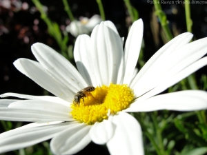 6:29:14 pollen pants sig