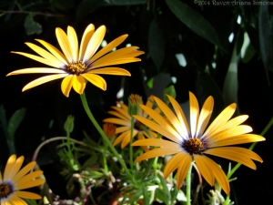 6:4:14 flowers 1 sig