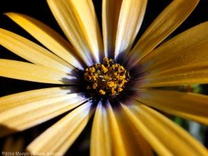 6:4:14 pollen sig