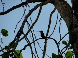 6:5:14 hummer tree