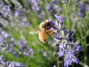 6:8:14 lavender bee explosion sig