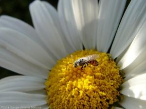 7:13:14 a tiny bee 2 sig