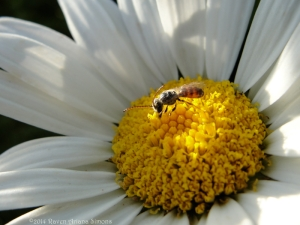7:13:14 a tiny bee antennae sig