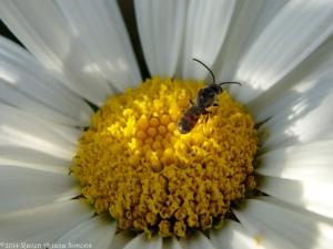 7:13:14 tiny bee 1 sig