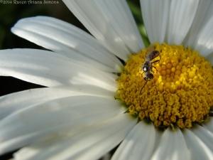 7:13:14 tiny bee face sig