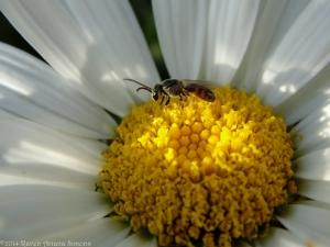 7:13:14 tiny bee good sig