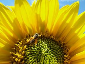 7:14:14 pants of pollen sig