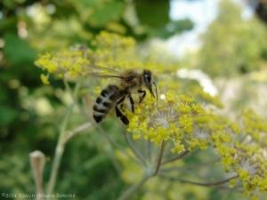 7:18:14 honeybee farther sig