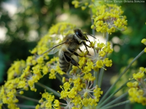 7:18:14 honeybee sig