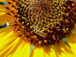 7:19:14 small bee sig