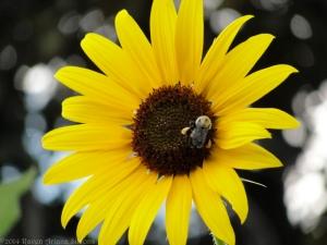 7:31:14 pollen bags sig