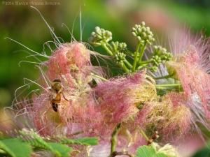 7:9:14 honeybee sig