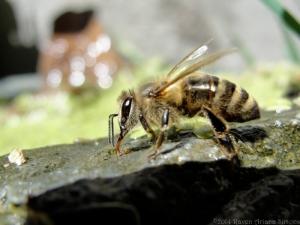 8:11:14 sparkling bee closer sig