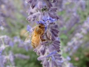 8:12:14 honeybee sig