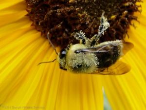 8:13:14 buddy pollen sig