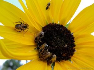 8:13:14 native bees 1 sig