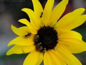 8:13:14 native bees sig