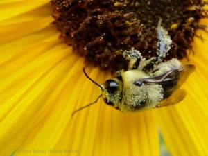 8:13:14 pollen buddy sig